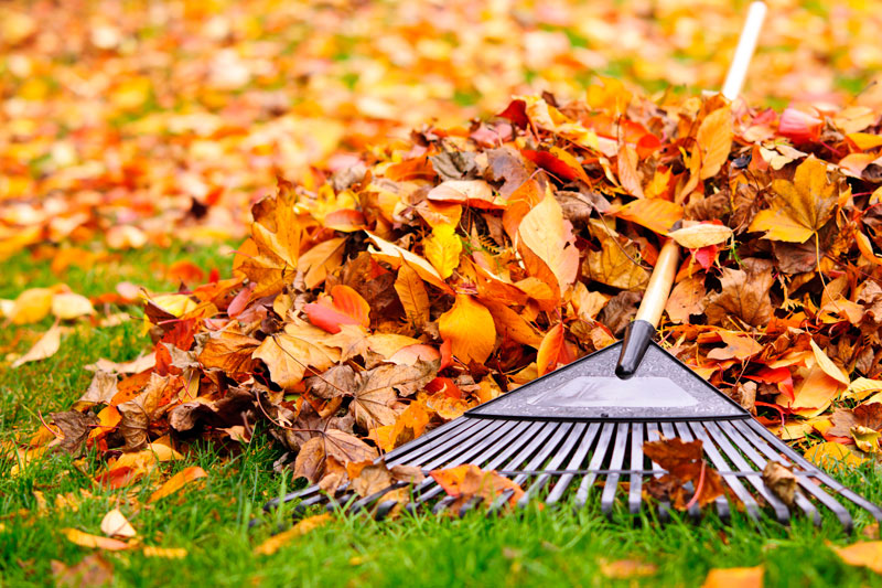 Rake and a pile of raked leaves; one of our maid services for your home.
